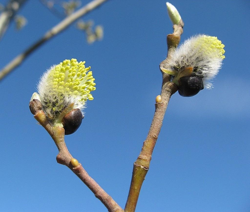 Опять весна-2