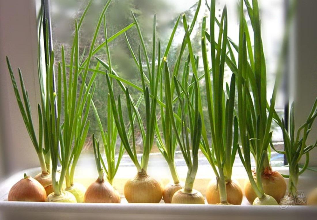Чудесный способ выращивания лука без земли!
