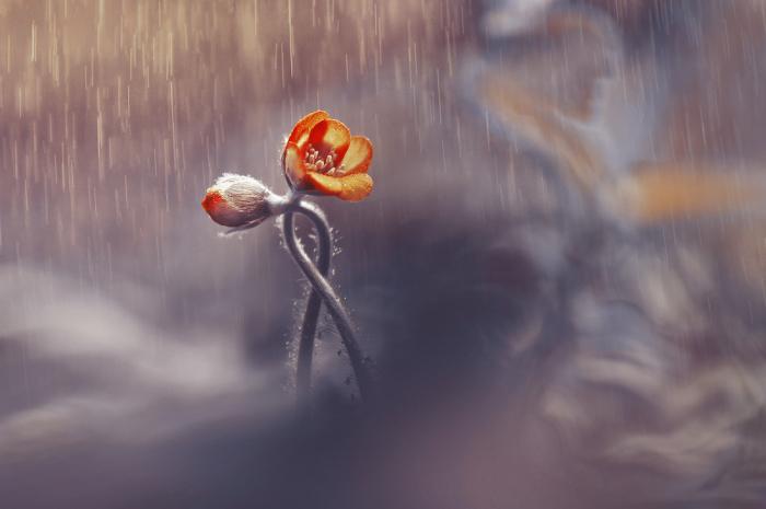 «Двое»: щемящее стихотворение Маргариты Алигер о главном в отношениях