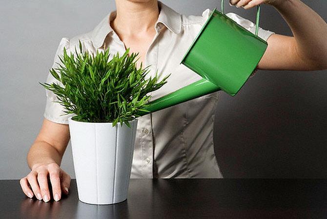 Как смягчить воду для полива комнатных растений?