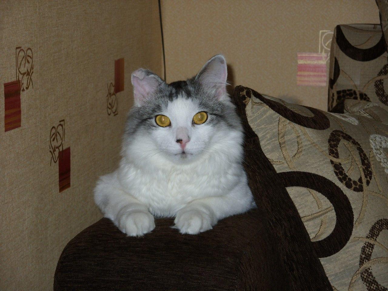 У нас в доме появился кот...