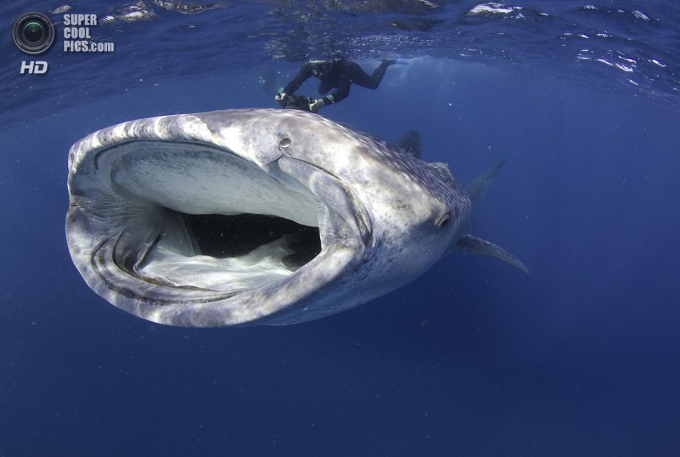 Победители конкурса подводной фотографии 2014 года