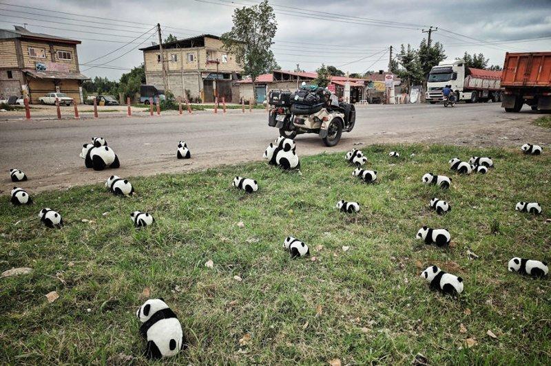 Нашествие панд на улицах Ирана монголия, мотоцикл, мотоцикл с коляской, мотоцикл урал, путешественники, путешествие, средняя азия, туризм