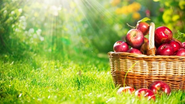 Килограмм красных яблок. История об отношениях