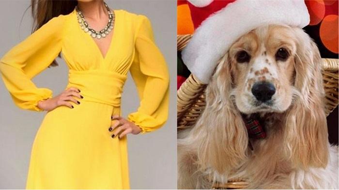 Уже совсем скоро! Вот в чём стоит встречать Желтую Земляную Собаку, чтобы 2018 год принес тебе удачу.