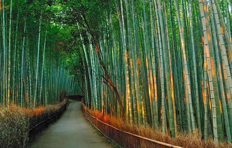 Бамбуковый коридор у подножья горы в Киото