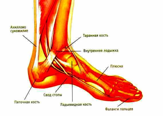 Achilles heel