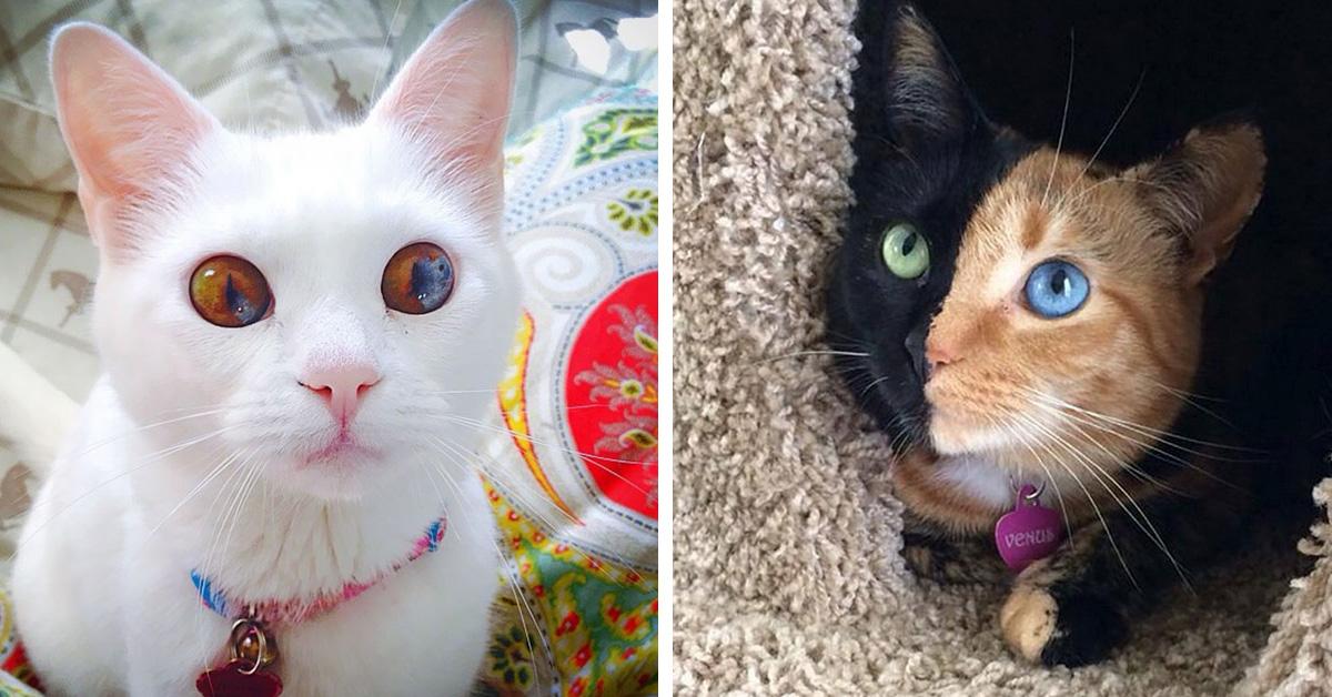 Пушистые красавчики: 30 самых чудных котиков со всего мира