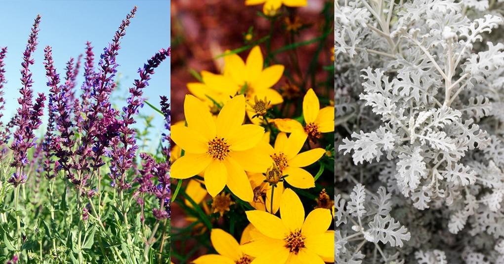14 красивых и неприхотливых растений, которые практически не нуждаются в уходе