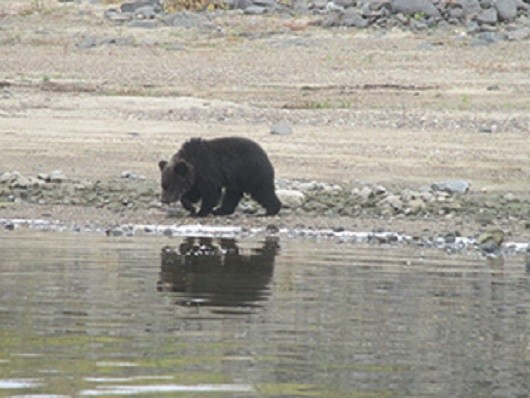 Расставание медвежат с мамой-медведицей животные, медветь