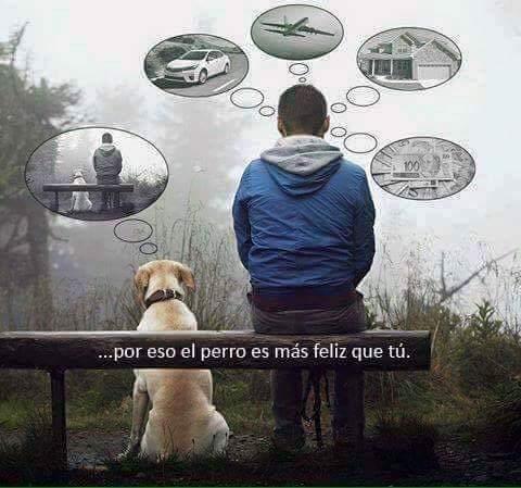 Почему собака счастливее, чем Ты? Просто у Вас разные мечты.....