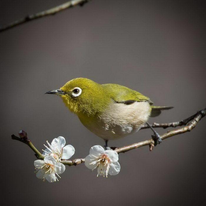 Природа Японии в фотографиях…