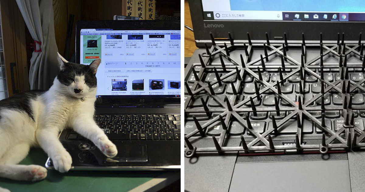 Japanese Man Creates Anti-Cat Keyboard Protection, Tests It On His Cat