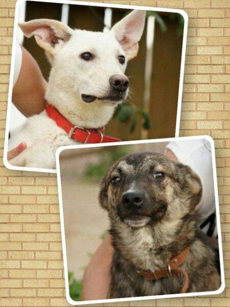 Срочно нужна помощь двум щенкам, найденным в лесу!