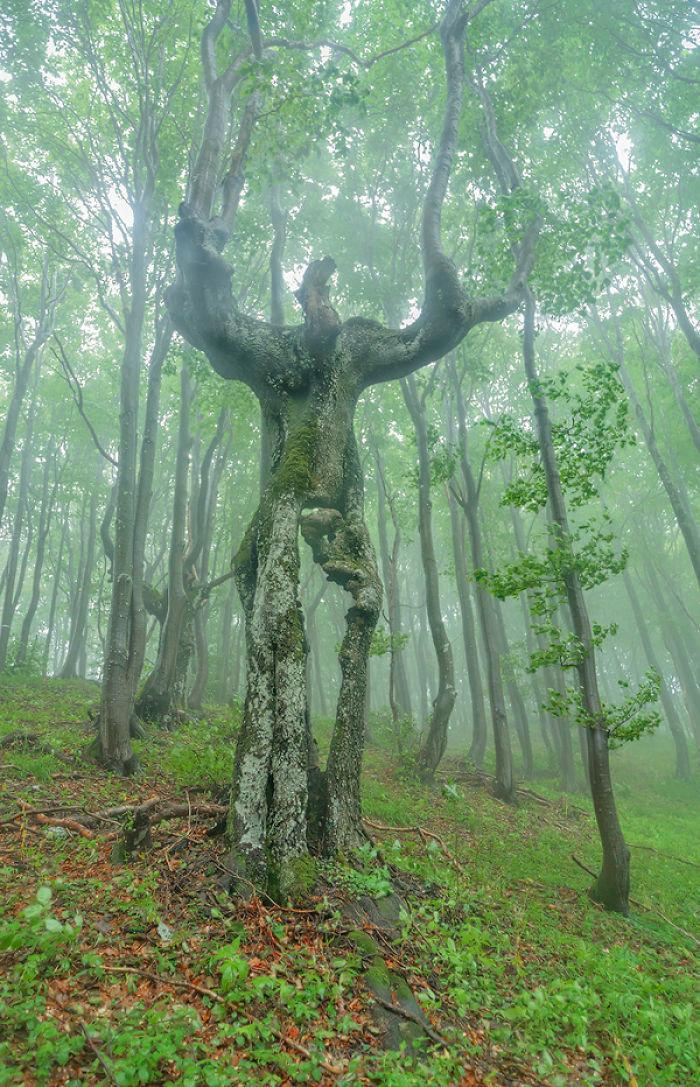 """3. Энт из """"Властелина колец"""" дерево, деревья, обман зрения, парейдолия, похоже да не то же, похоже на, похоже на лицо"""