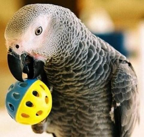 Как одного попугая, советник из Анголы решил провести в СССР минуя таможню!