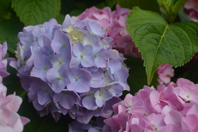 Какие комнатные растения могут вызывать аллергию?