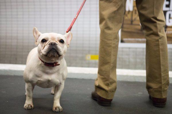 Комик жестоко разыграл невоспитанную пассажирку с собакой в аэропорту