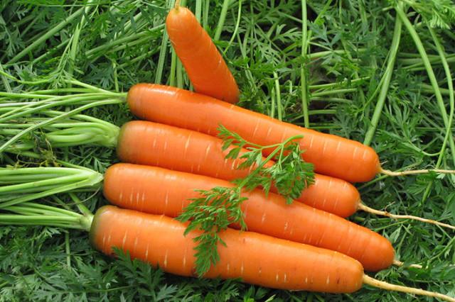 Главные секреты выращивания крупной морковки