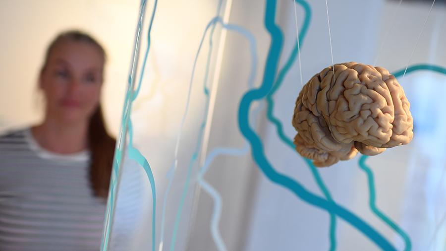 Найден Способ Продлить Молодость Мозга