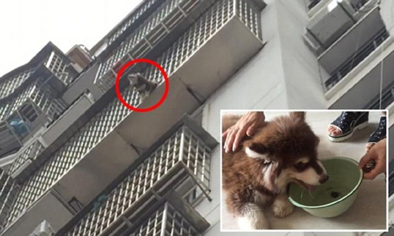 Китайцы всем миром спасли попавшего в беду щенка