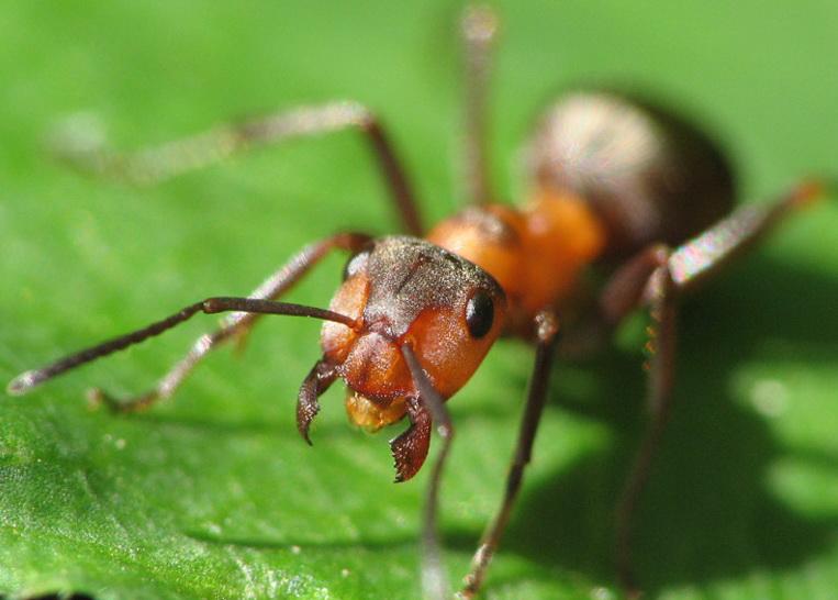 Как избавиться от муравьев за пару секунд без ядохимикатов