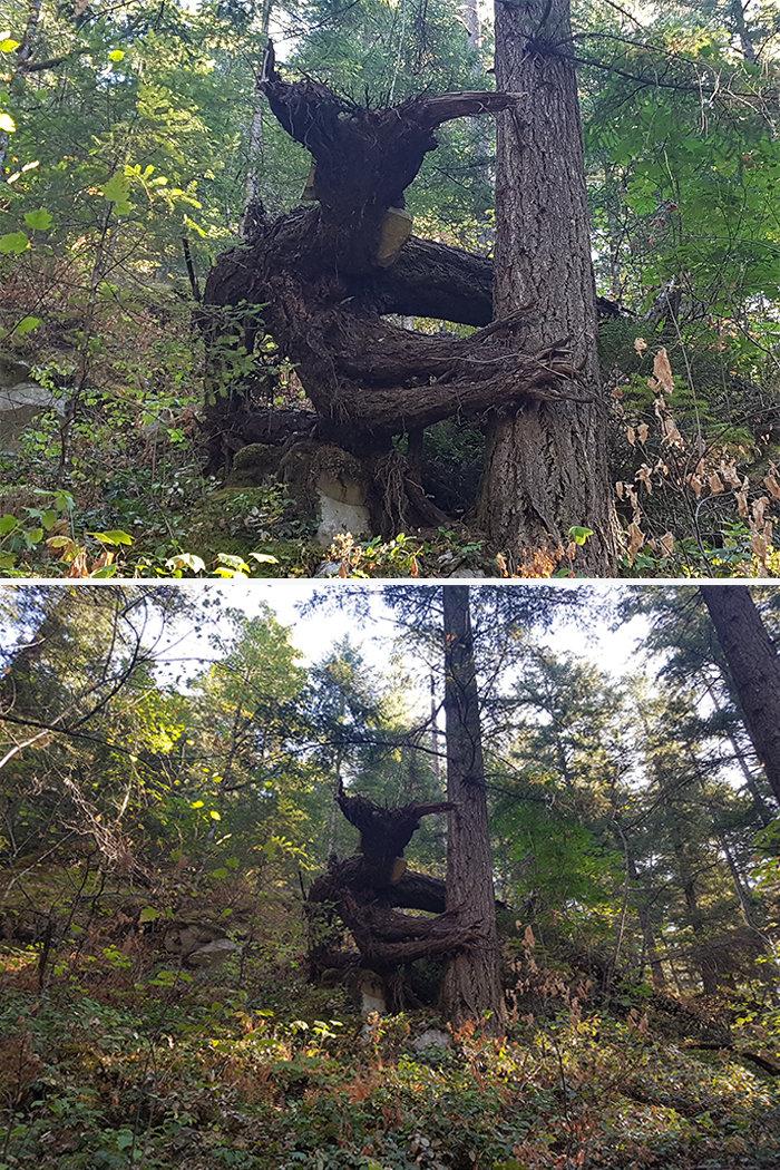 1. Дерево-дьявол дерево, деревья, обман зрения, парейдолия, похоже да не то же, похоже на, похоже на лицо