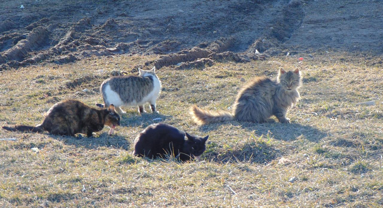 Братья наши меньшие: День кошек в России