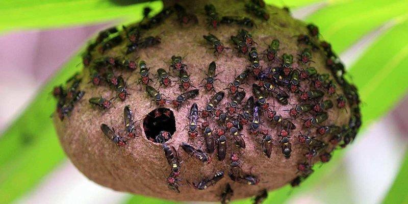 Ученые создали на основе яда осы новый антибиотик