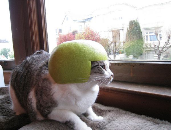Кошачьи шлемы