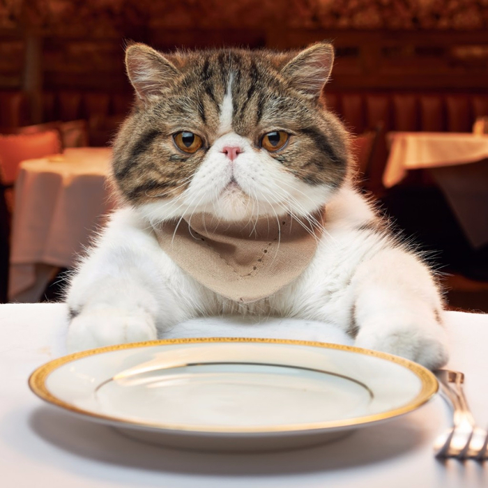 Не понял... А где моя еда?!
