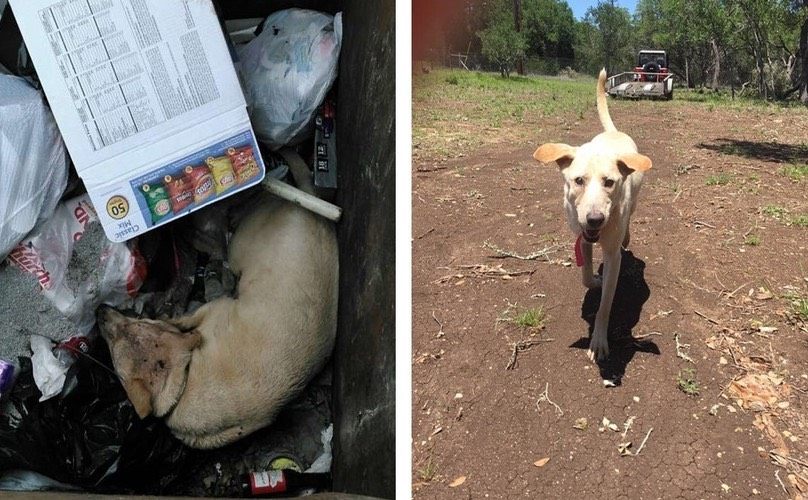 Dog Rescued From Dumpster Is Making An Incredible Recovery Just 2 Weeks Later