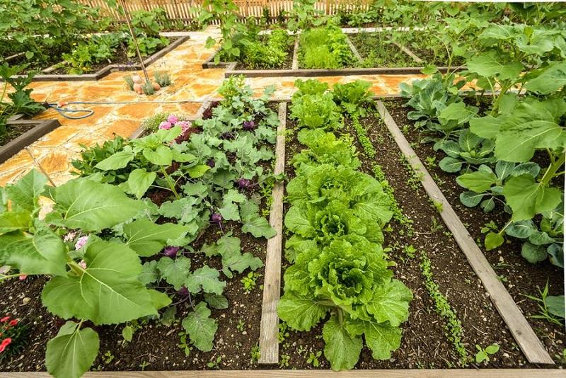 Секреты совместной посадки овощей