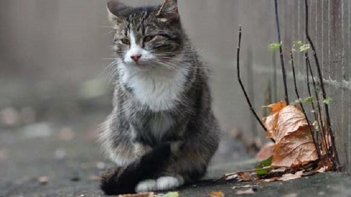 Кот не сходя с места две недели ждал хозяйку, которая попала в больницу