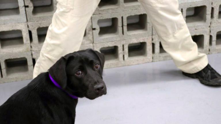 Из ЦРУ уволили собаку Лулу, озвучив причину такого решения