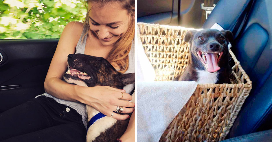 Так выглядит настоящее собачье счастье! Фотографии приютских собак в день обретения семьи.