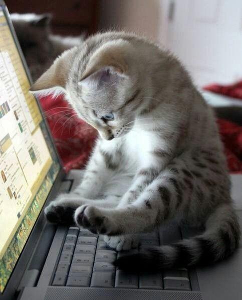 Осваивать технику коты, милота, поведение, счастье, эмоции