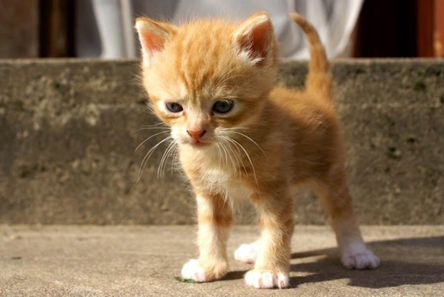 Котёнок, которого больше никто и никогда не обидит