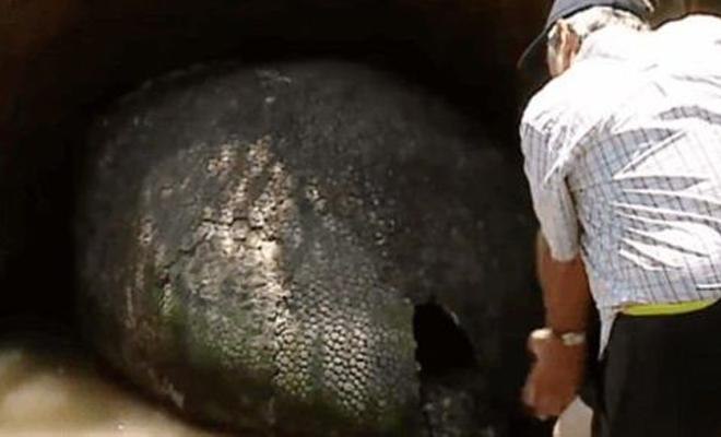 Фермер думал, что нашел на яйцо динозавра, но все оказалось намного хуже!