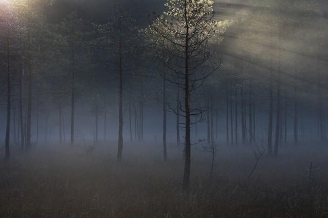 Фаворит конкурса. «Мистический лес». Ленинградская область. Автор Кузнецов Александр