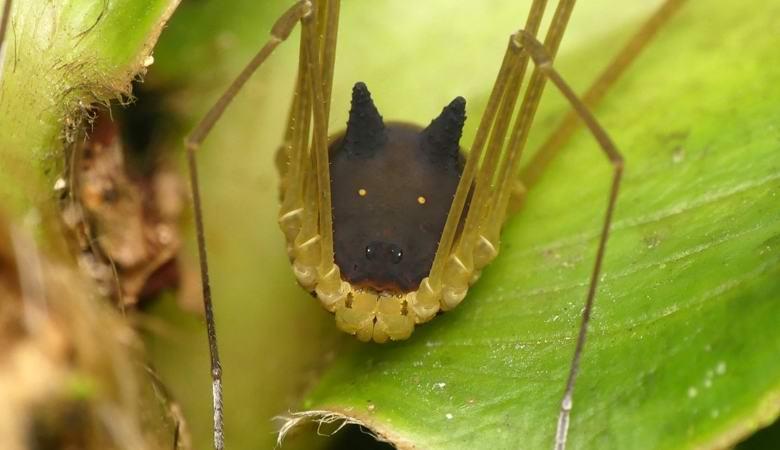 Открыт вид пауков с «волчьей…