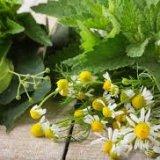 Лекарственные травы рецепты применение противопоказания
