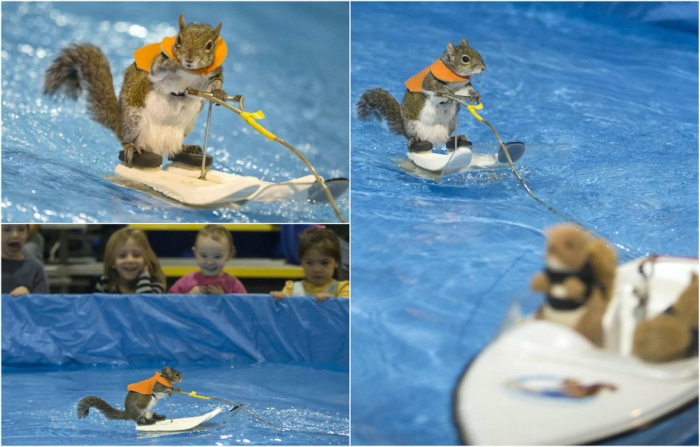 Белки на водных лыжах
