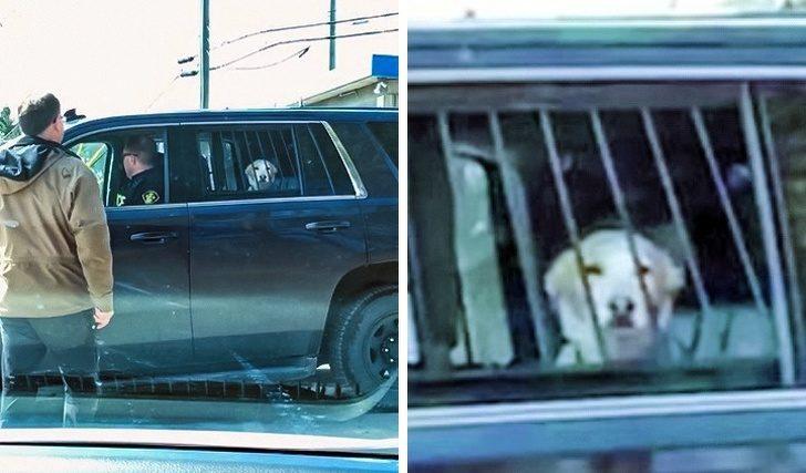 У животных тоже бывают неуда…