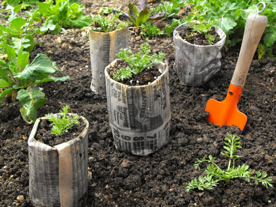 Как можно использовать бумагу в саду и огороде