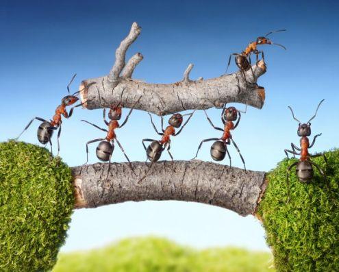 Оказывается, муравьи вовсе не любят работать!  Они такие же лентяи, как и мы. Это  выяснили ученые
