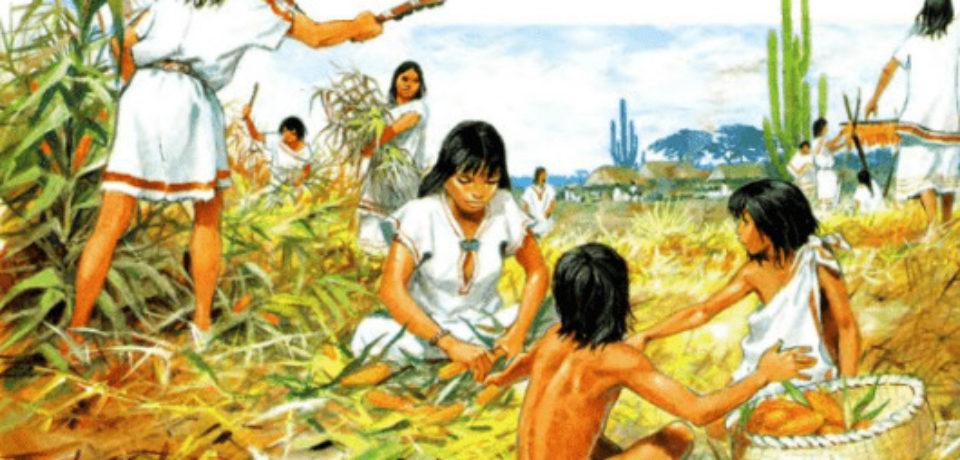 Селекционные работы проводились еще 23000 лет назад – ученые
