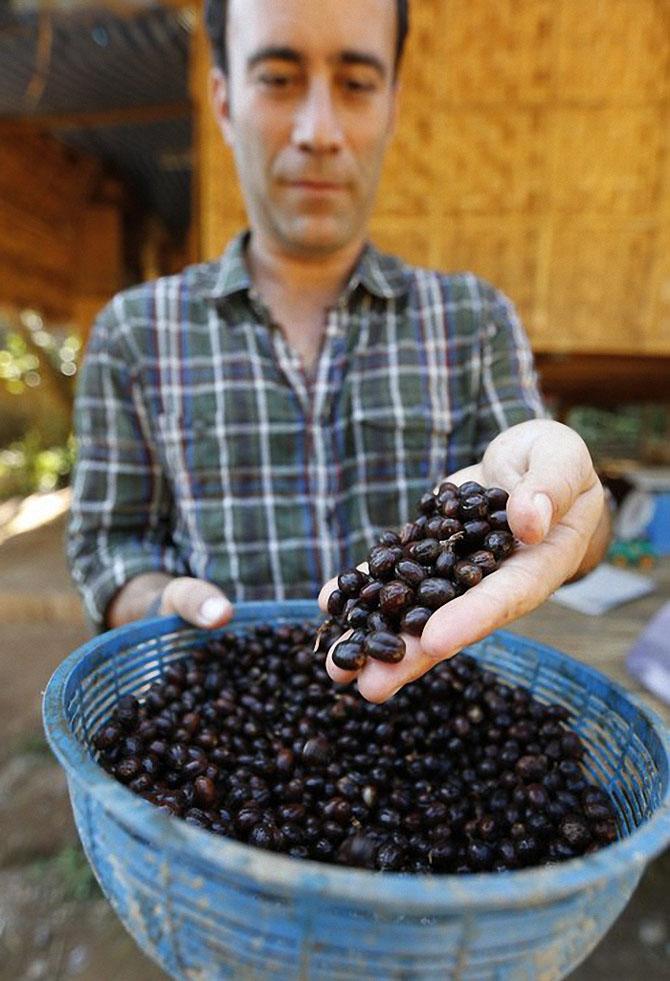 Black Ivory — самый дорогой кофе в мире