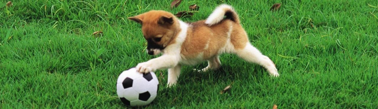 Дрессировка собак – основные правила