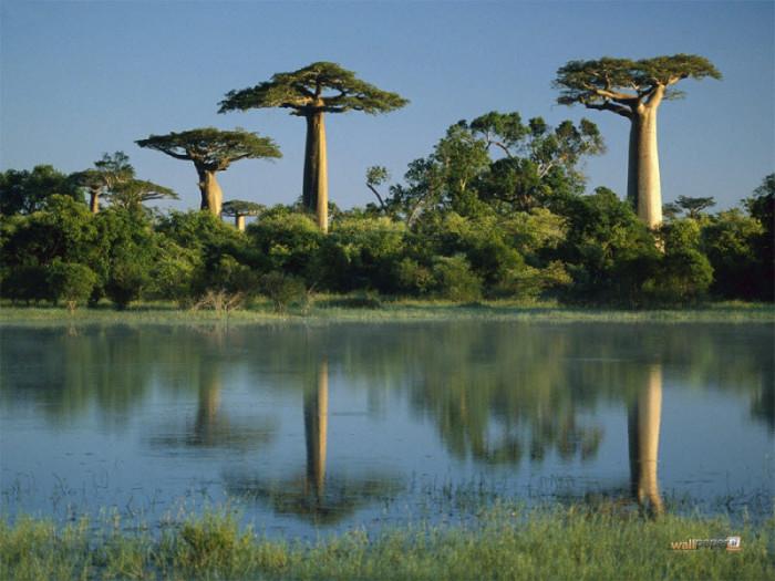 Леса, которые скоро могут исчезнуть